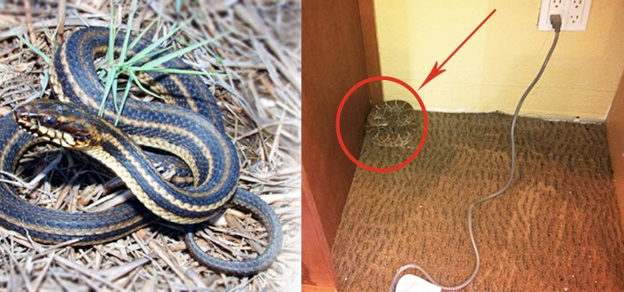 What to Do If You Encounter a Snake on Your Property