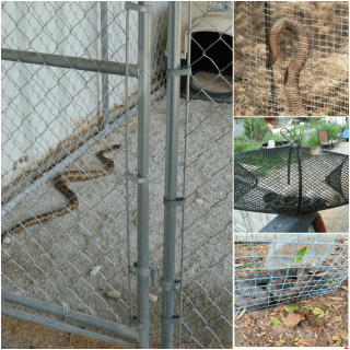 Snake Proofing Yard Pest Control North Brisbane