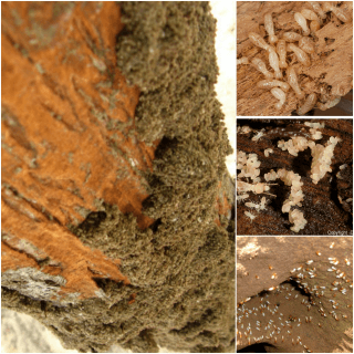 Termite Habitat and Colony