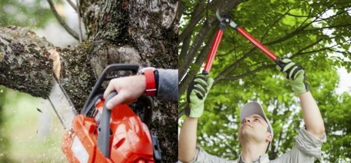 Trimming Branches Pest Control North Brisbane