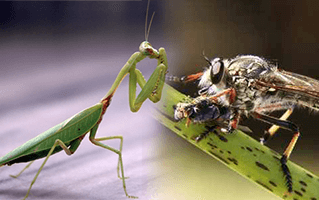 Good Insects Pest Control North Brisbane