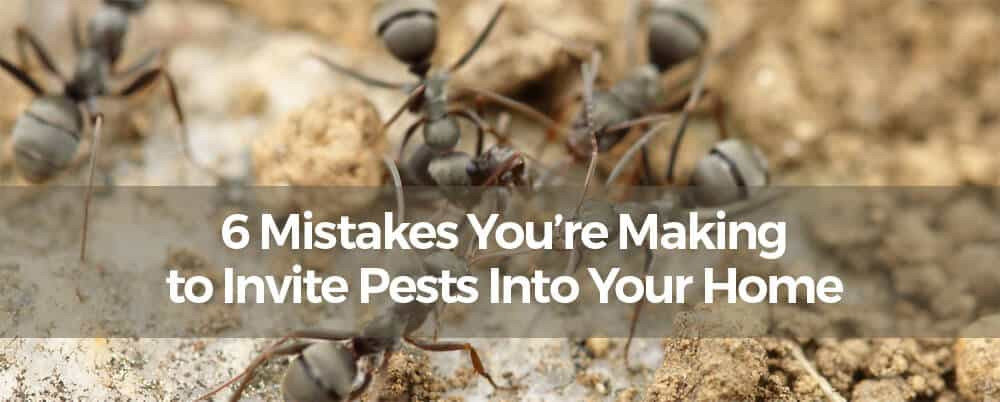 6 Mistakes You're Making to Invite Pests Into Your Home