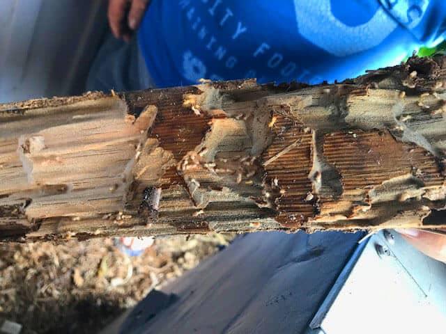 Termite Inspection Pest Control North Brisbane