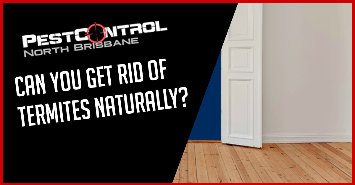 Can You Get Rid Of Termites Naturally?