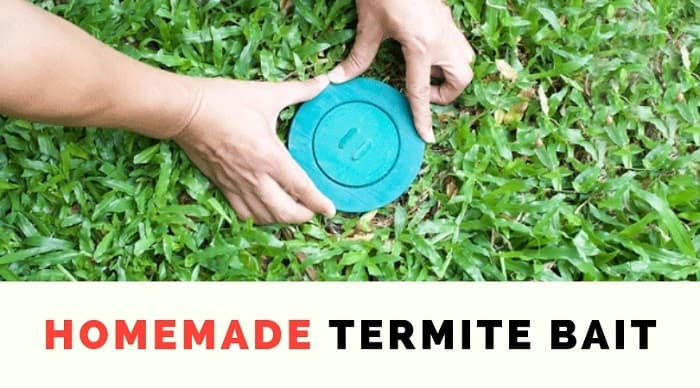homemade termite bait Pest Control North Brisbane