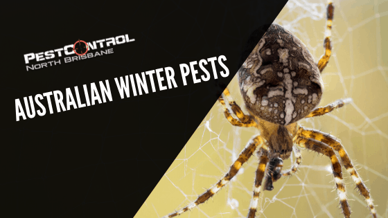 Australian Winter Pests To Look Out For