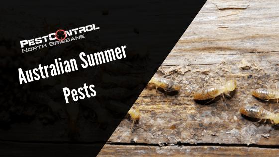 Australian Summer Pests