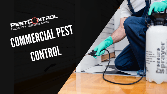 Commercial Pest Control In North Brisbane