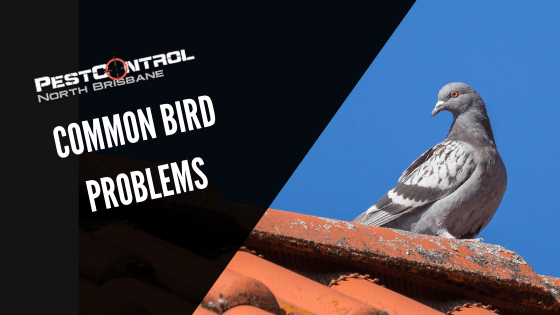 Common Bird Problems