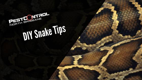 DIY Tips to Keep Snakes Away in Summer