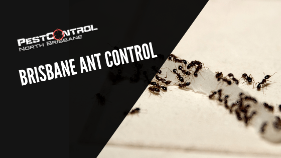 Brisbane Ant Control