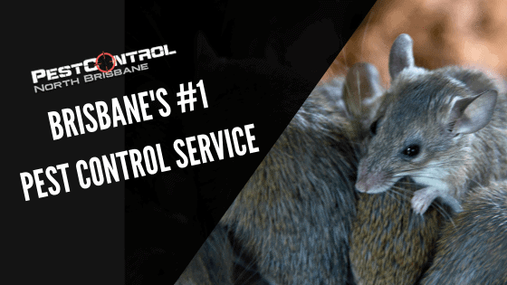 Why You Should Choose Us For Your Pest Control Needs