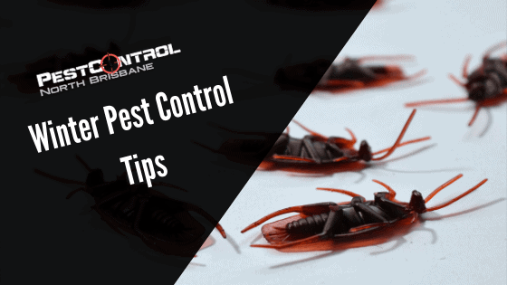 How To Keep Winter Pests Away