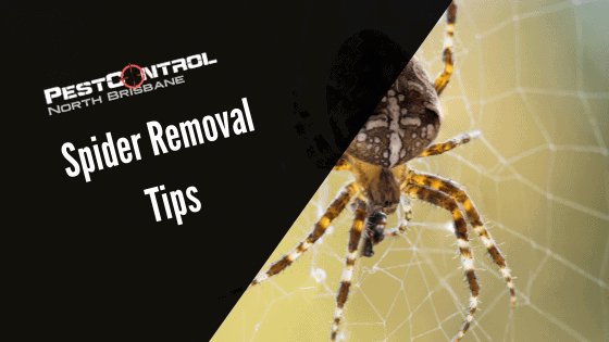 How To Get Rid of Spiders