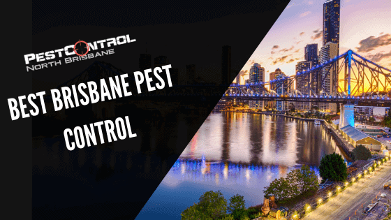 2 Reasons We Are The Best Brisbane Pest Control