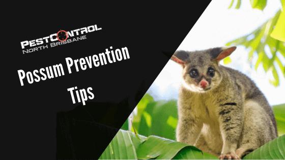 3 Possum Prevention Tips