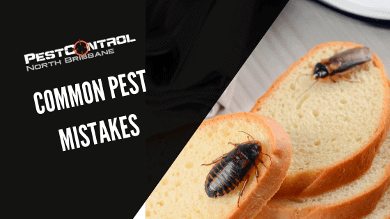 Common Pest Mistakes To Watch Our For
